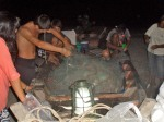 night fishing (9)
