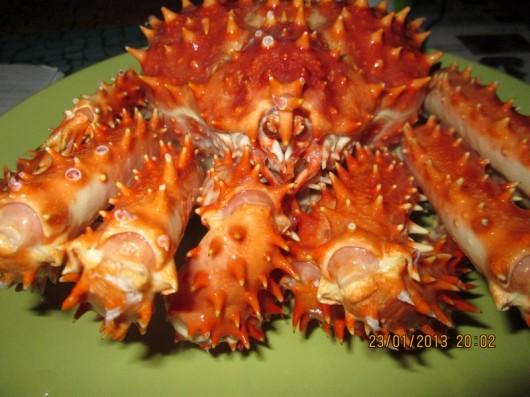 king crab (2)
