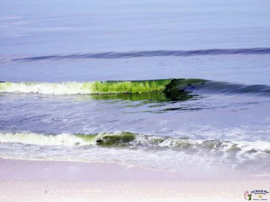 Green Sea1