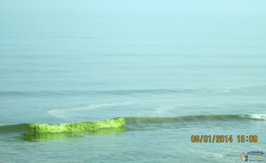 Green Sea5