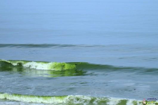 Green Sea6