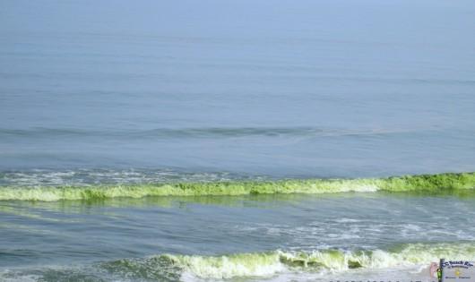 Green Sea8