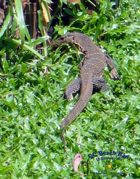 Lizard (7)