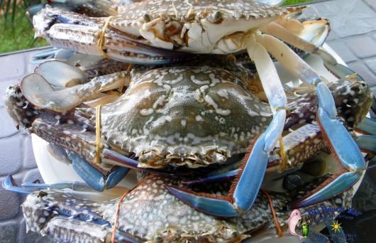 Crabs (6)