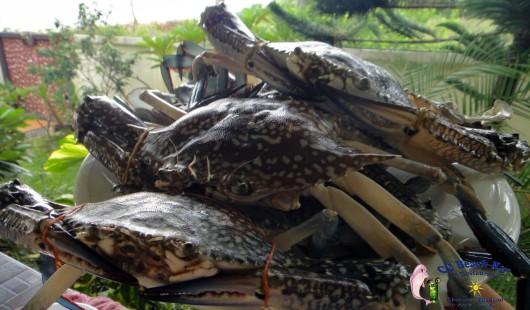 Crabs (7)