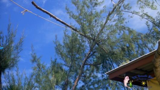 tree cutting (3)